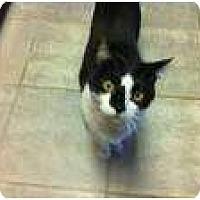 Adopt A Pet :: Sucia - New York, NY