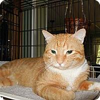 Adopt A Pet :: Fozzy Bear - CARVER, MA