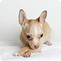 Adopt A Pet :: Chloe - Oakland, CA