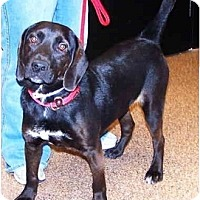 Adopt A Pet :: AxelPENDING - Toronto/Etobicoke/GTA, ON