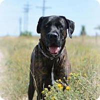 Adopt A Pet :: Tyger - Cheyenne, WY