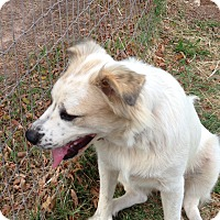 Adopt A Pet :: Susie - Natchitoches, LA