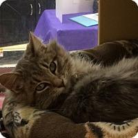 Adopt A Pet :: Rainier - Byron Center, MI