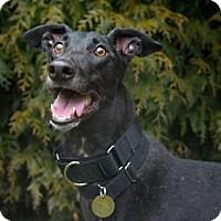 Adopt A Pet :: Winter - Seattle, WA