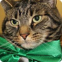 Adopt A Pet :: REX - Clayton, NJ