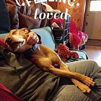 Adopt A Pet :: Rubie (Acc) - Whitestone, NY