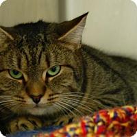 Adopt A Pet :: Tabby - Toccoa, GA