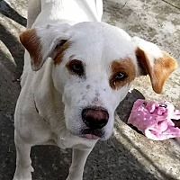 Adopt A Pet :: Sherman - Kalamazoo, MI