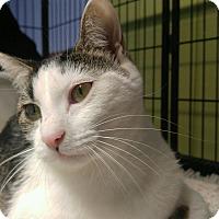 Adopt A Pet :: SMORES - Cleveland, TN