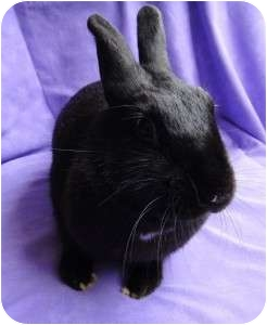 Other/Unknown Mix for adoption in Los Angeles, California - Blackberry