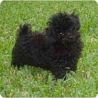 Adopt A Pet :: Izzy - Miami, FL