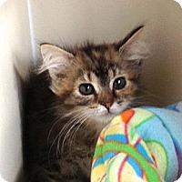 Adopt A Pet :: Addy and Ada Lou - Richfield, OH