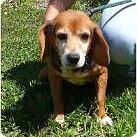 Adopt A Pet :: Hannah - Indianapolis, IN
