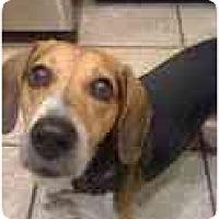 Adopt A Pet :: Mighty Max - Phoenix, AZ
