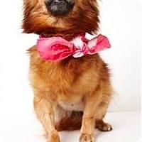 Adopt A Pet :: Samantha - New York, NY