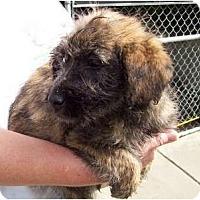 Adopt A Pet :: Pepper - courtesy post - Glastonbury, CT