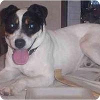 Adopt A Pet :: Jackson - Scottsdale, AZ