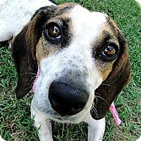 Adopt A Pet :: Carley - Zebulon, NC