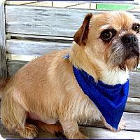 Adopt A Pet :: MAXIMUS - ADOPTION PENDING - Seymour, MO