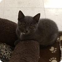 Adopt A Pet :: Luna - Byron Center, MI
