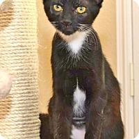 Adopt A Pet :: Capri - Davis, CA
