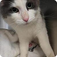 Adopt A Pet :: Urban - Hamilton, ON