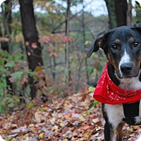 Adopt A Pet :: Ruger - New Castle, PA