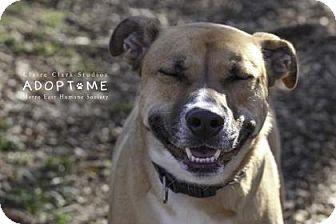 Shepherd (Unknown Type) Mix Dog for adoption in Edwardsville, Illinois - Barney