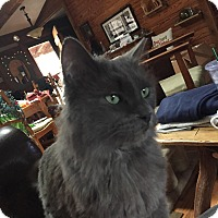 Adopt A Pet :: Wolfie - Waynesville, NC