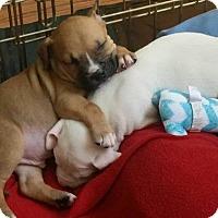 Adopt A Pet :: Buster - Windermere, FL