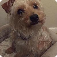 Adopt A Pet :: Hootie Fort - Seattle, WA