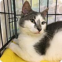 Adopt A Pet :: Liberty - Richmond, VA