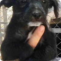 Adopt A Pet :: Kados - Las Vegas, NV