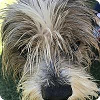 Adopt A Pet :: Ernie - Chula Vista, CA