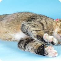 Adopt A Pet :: Hetty - Wyandotte, MI