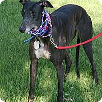 Adopt A Pet :: Starz Aftershock