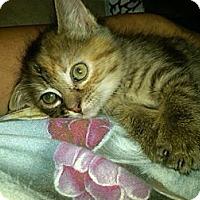 Adopt A Pet :: Merryweather - Sterling Hgts, MI