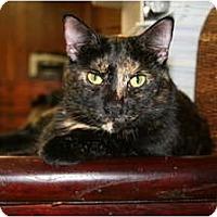 Adopt A Pet :: Bridgette - Naples, FL