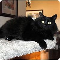 Adopt A Pet :: Misty - Palmdale, CA