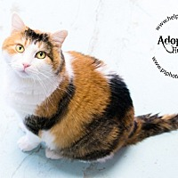 Adopt A Pet :: Gingerbread - Belton, MO