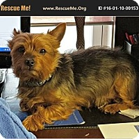Adopt A Pet :: Gizmo - Indianapolis, IN
