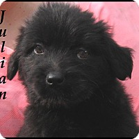 Adopt A Pet :: Julian- Adoption Pending - Marlborough, MA