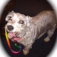 Adopt A Pet :: Sophie - Winter Haven, FL