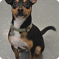 Adopt A Pet :: Frank - Kalamazoo, MI