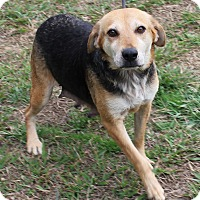 Adopt A Pet :: Spanky - Colonial Heights, VA