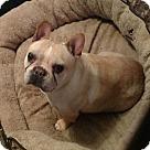 Adopt A Pet :: ABBEY