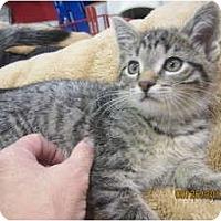 Adopt A Pet :: Vinnie - Sterling Hgts, MI