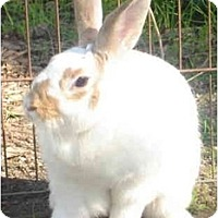 Adopt A Pet :: Pulani - Santee, CA