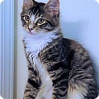 Adopt A Pet :: Charlie - Victor, NY