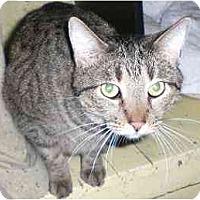 Adopt A Pet :: Sequoia - Lombard, IL
